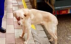 Detenido por maltratar a su perro hasta la muerte