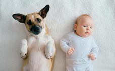 Cómo preparar a las mascotas para la llegada de un bebé