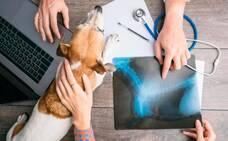 Enfermedades humanas que sufren las mascotas
