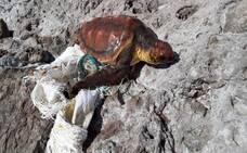 Rescatada una tortuga de 38 kilos en Gran Canaria