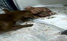 Muere Hope, la perra maltratada con un tumor