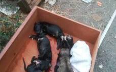 Hallan cinco cachorros en la basura