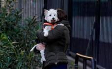 Más pruebas de la transmisión de Covid de humanos a gatos y perros