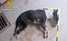 Denunciado por dejar a su perro morir de hambre