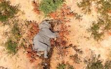 La muerte de elefantes, por una neurotoxina