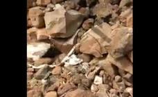 Dejan morir de hambre a un perro atado a una piedra