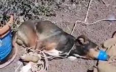Condenados por amordazar hasta la muerte a un perro en Teguise