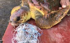 Tres tortugas rescatadas en aguas de El Hierro