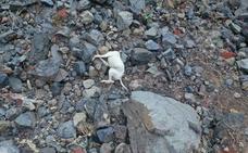 Investigan a dos cazadores por matar y arrojar a un barranco a sus perros