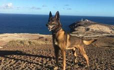 La Policía Nacional entrega en adopción al perro «Basco»
