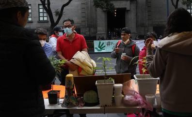 La Corte Suprema de México despenaliza el uso lúdico de la marihuana