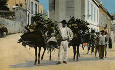 Canarias ayer, hoy y siempre