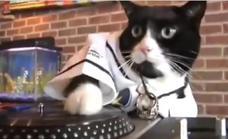 Un gato pone la música a tope y amarga el sueño a sus vecinos