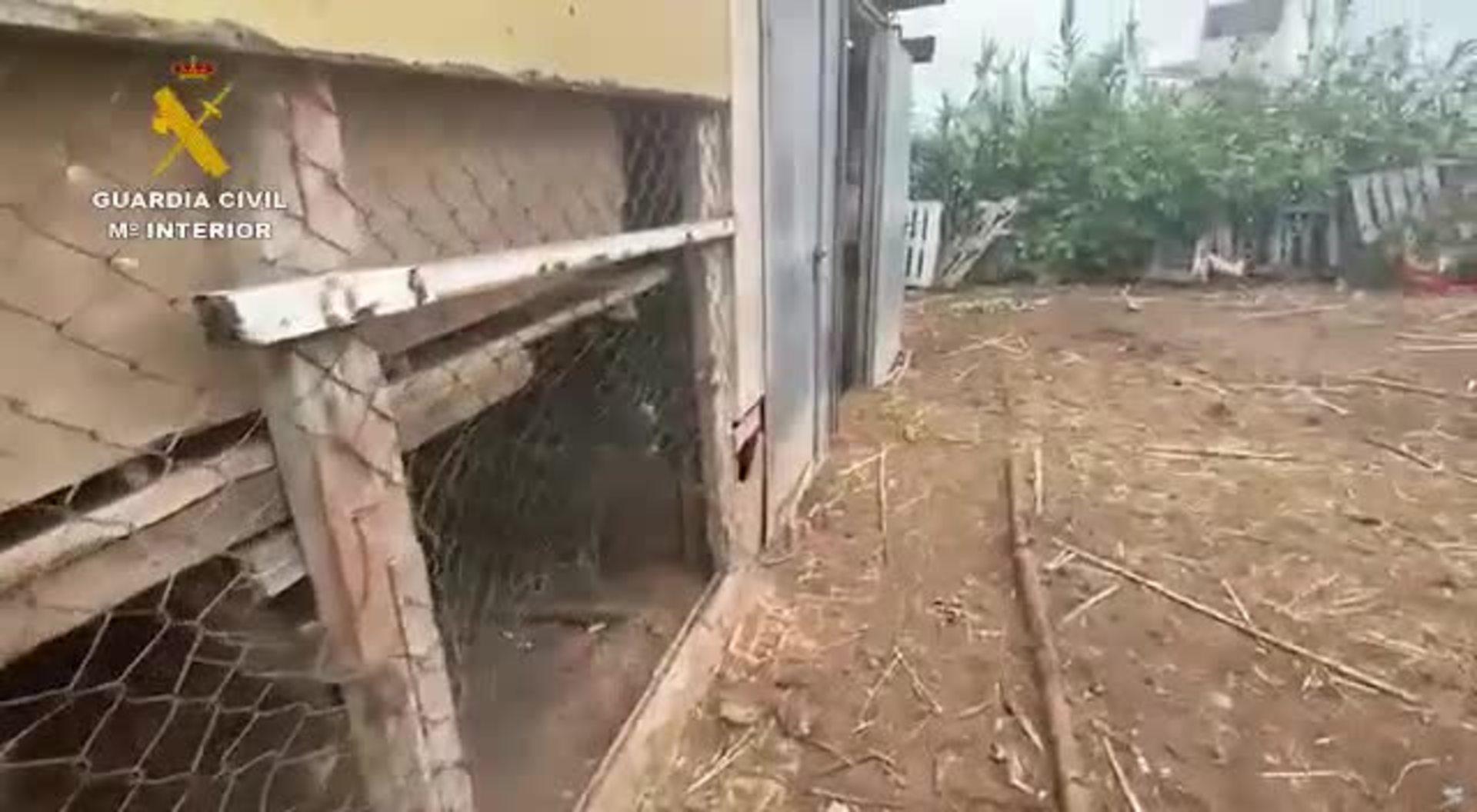 Investigado por maltratar a un poni