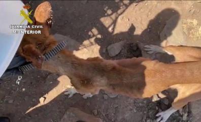 Tres detenidos en Gran Canaria por maltrato animal