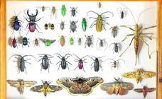 ¿Por qué cada vez hay menos insectos?