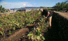 Conatus abre al público sus entrañas vitivinícolas en Lajares