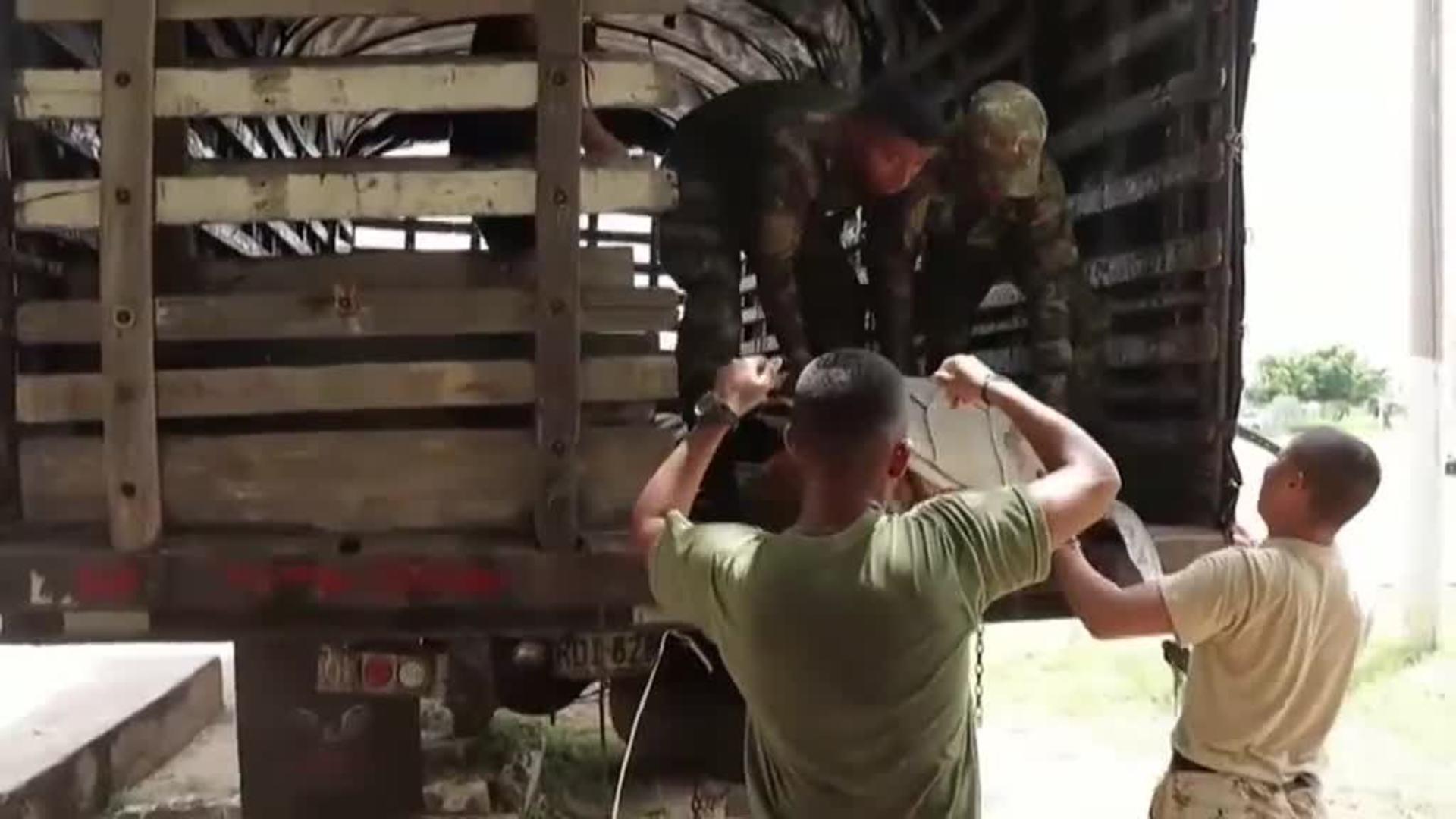 Liberadas en el mar 31 tortugas que habían sido capturadas por traficantes en Colombia