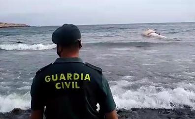 Llega una ballena muerta a la playa de Ojos de Garza