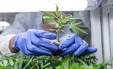 El Congreso rechaza legalizar el consumo y venta de hachís y marihuana