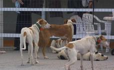 Hallan muerto a un rehalero de Salamanca con heridas de sus perros